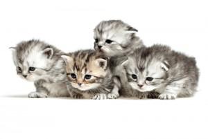 Rp Cute Kittens Litter Box Training Steamers Carpet Care