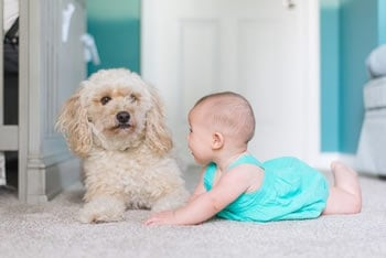 Common Carpet Cleaning Mistakes That Pet Owners Make